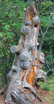 color stump